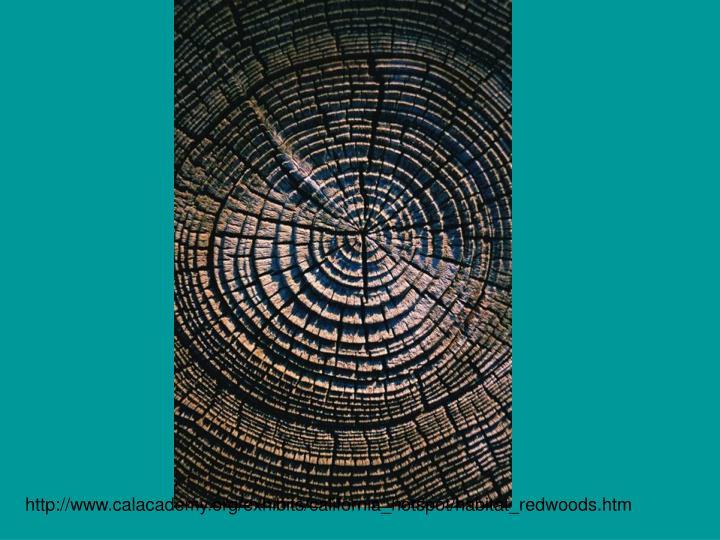 http://www.calacademy.org/exhibits/california_hotspot/habitat_redwoods.htm
