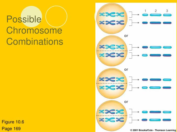 Possible Chromosome