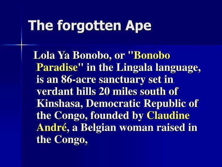 The forgotten Ape