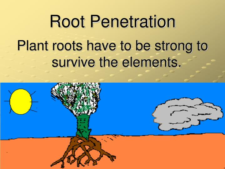 Root Penetration