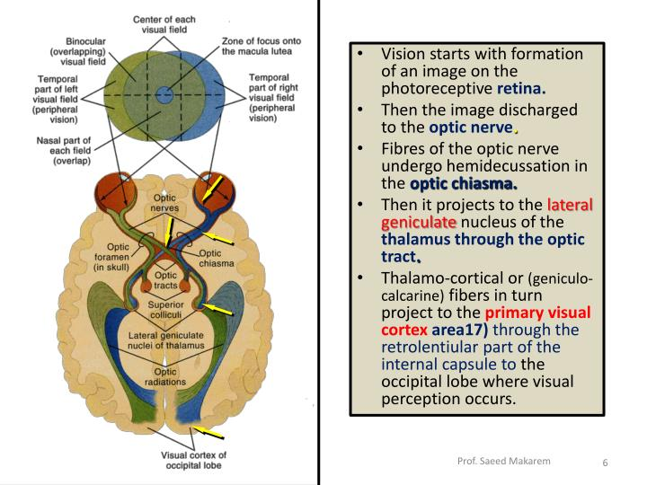 Vision starts with formation of an image on the photoreceptive