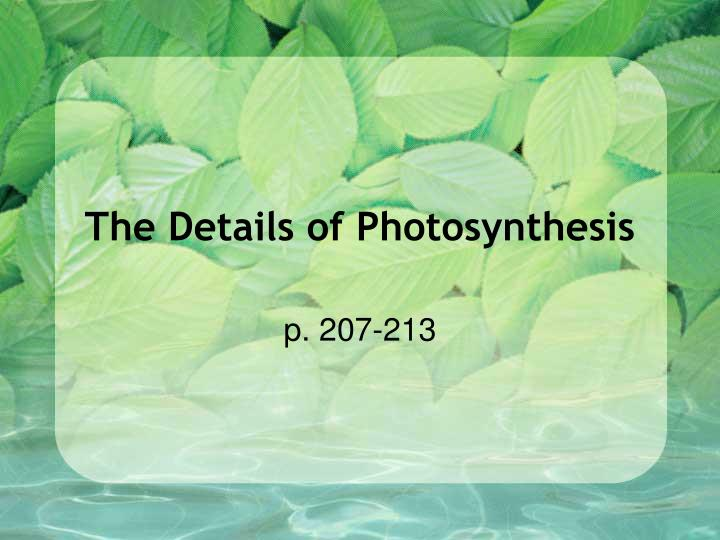 the details of photosynthesis n.