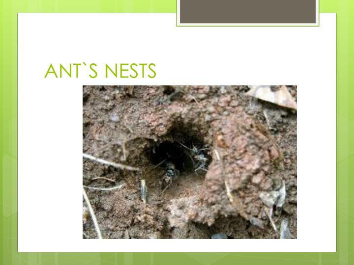 ANT`S NESTS