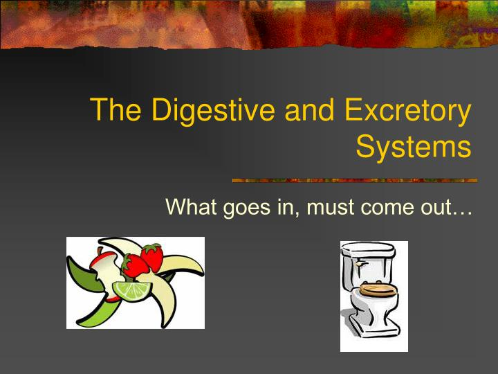 the digestive and excretory systems n.