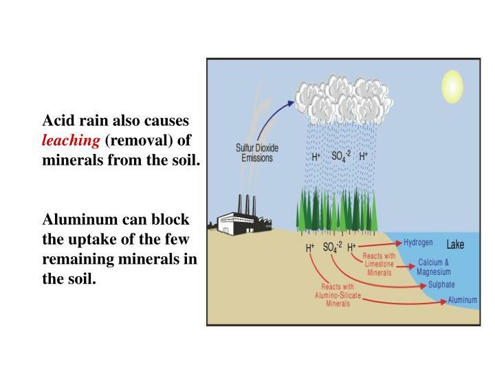 Acid rain also causes