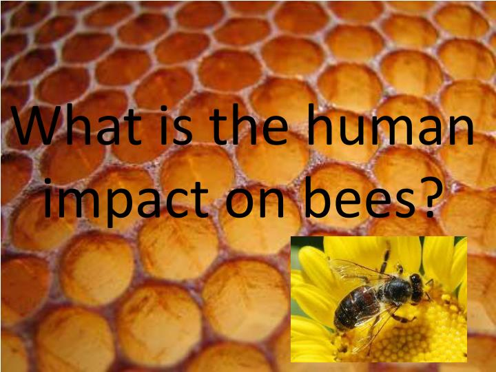 what is the human impact on bees n.