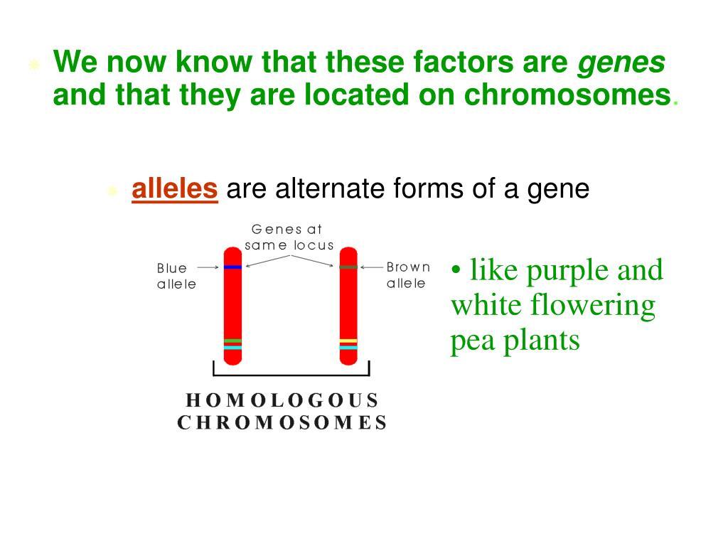 PPT - Mendelian Genetics PowerPoint Presentation, free ...