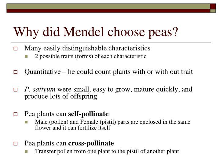 why did mendel use peas