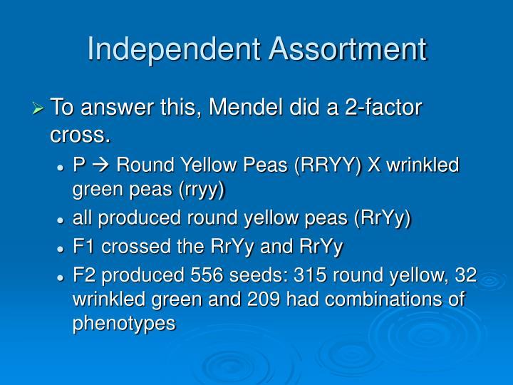 Independent assortment1