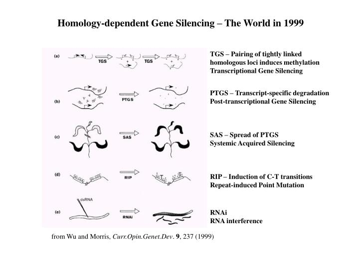 Homology-dependent Gene Silencing – The World in 1999