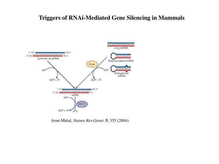 Triggers of RNAi-Mediated Gene Silencing in Mammals