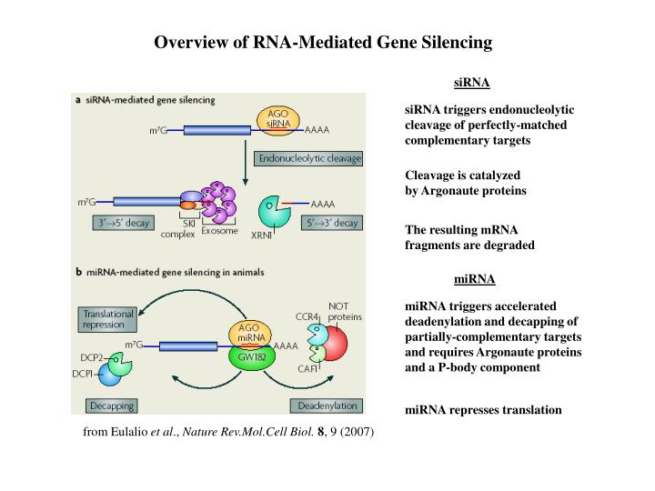 Overview of RNA-Mediated Gene Silencing