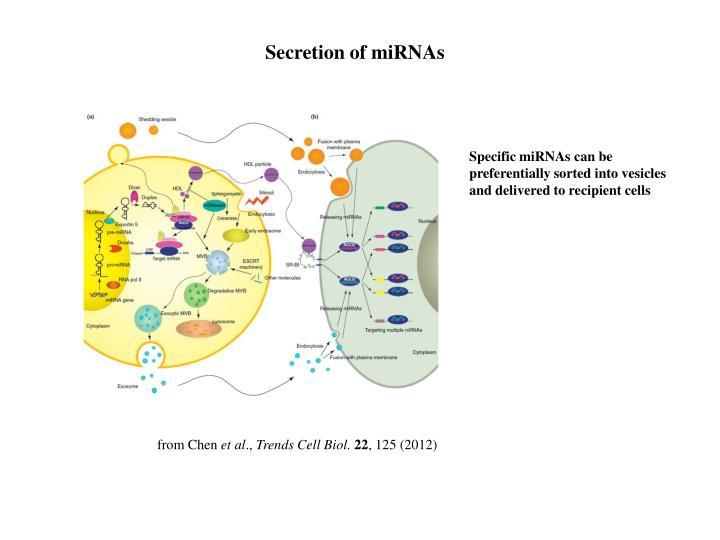 Secretion of miRNAs