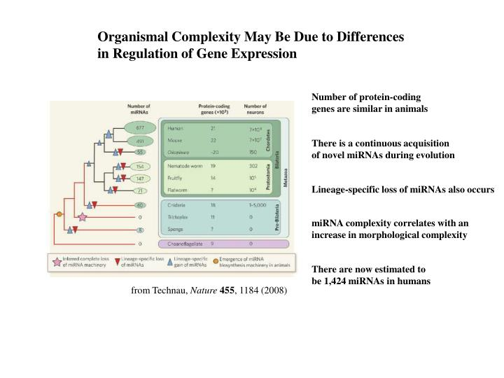 Organismal Complexity May Be Due to Differences