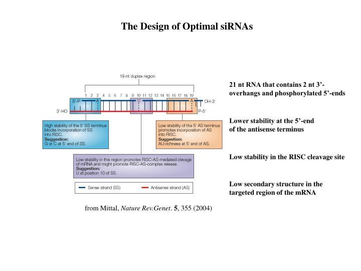 The Design of Optimal siRNAs
