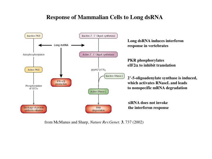 Response of Mammalian Cells to Long dsRNA