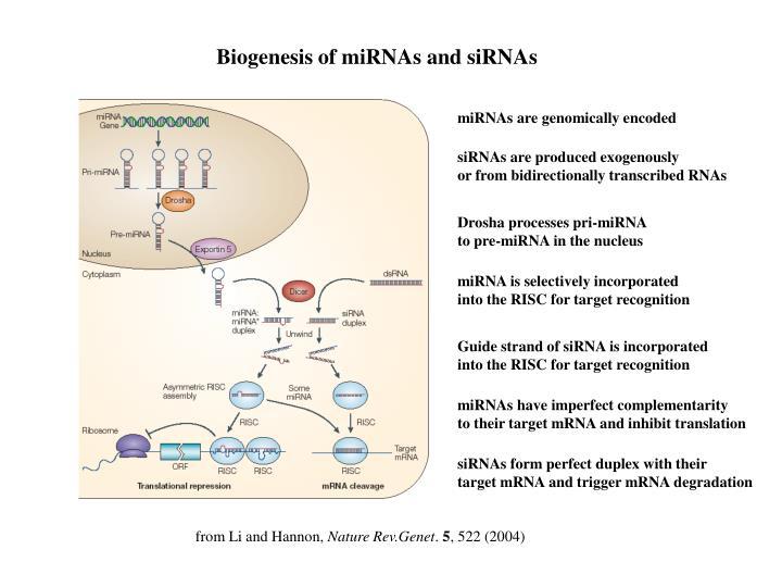 Biogenesis of miRNAs and siRNAs
