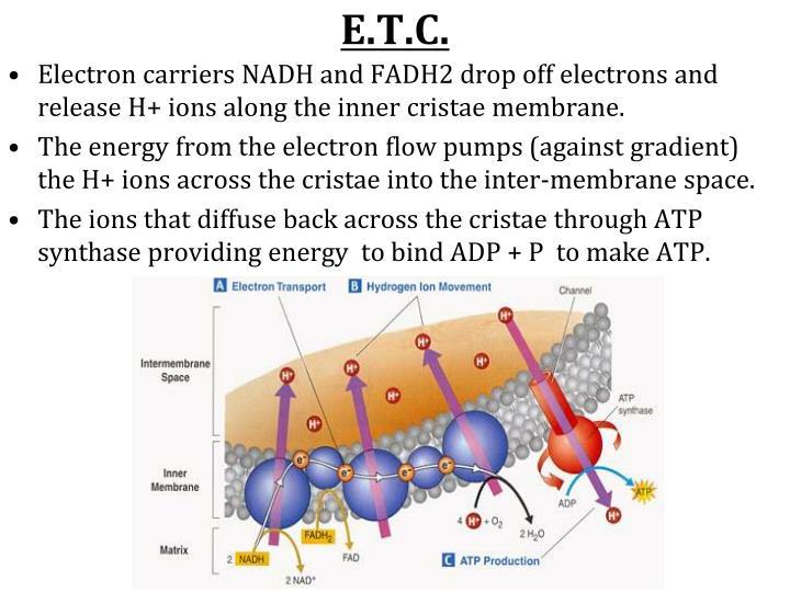 E.T.C.