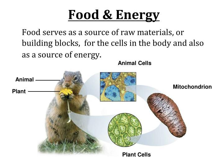 Food & Energy