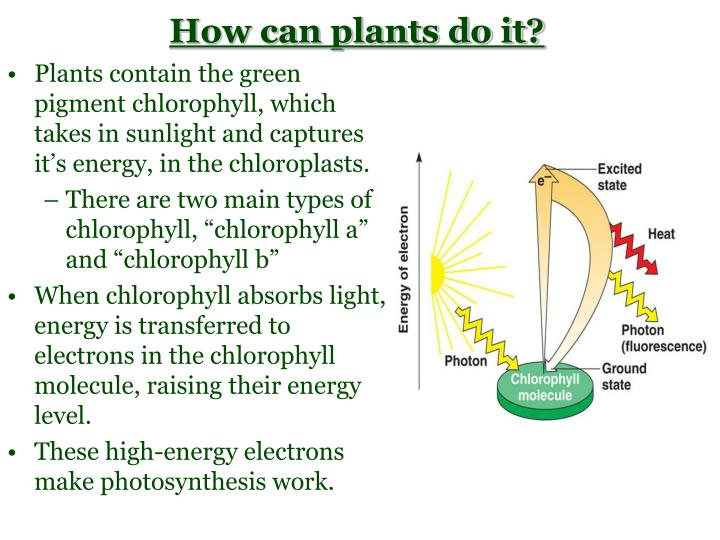 How can plants do it?
