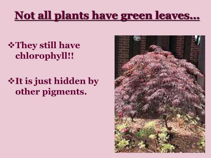 They still have chlorophyll!!