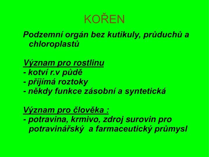 Podzemní orgán bez kutikuly, průduchů a        chloroplastů