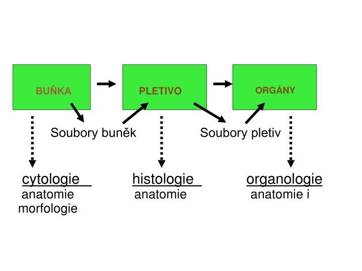 Soubory buněk                  Soubory pletiv
