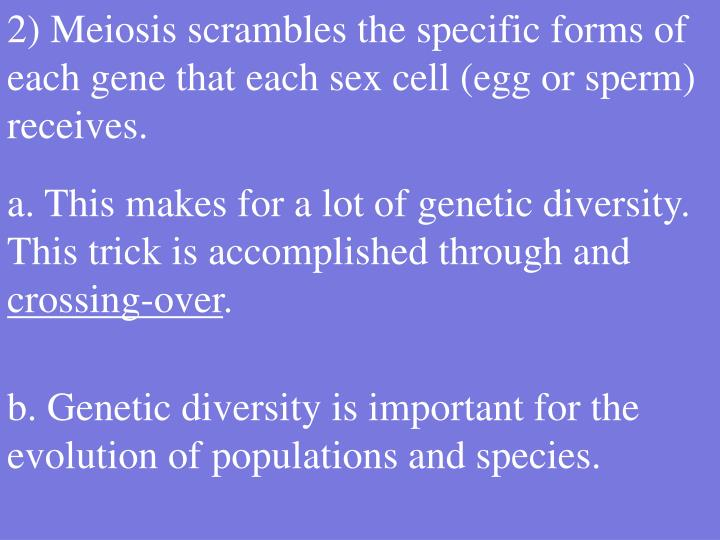 2) Meiosis scrambles the specific forms of each gene that each sex cell (egg or sperm) receives.