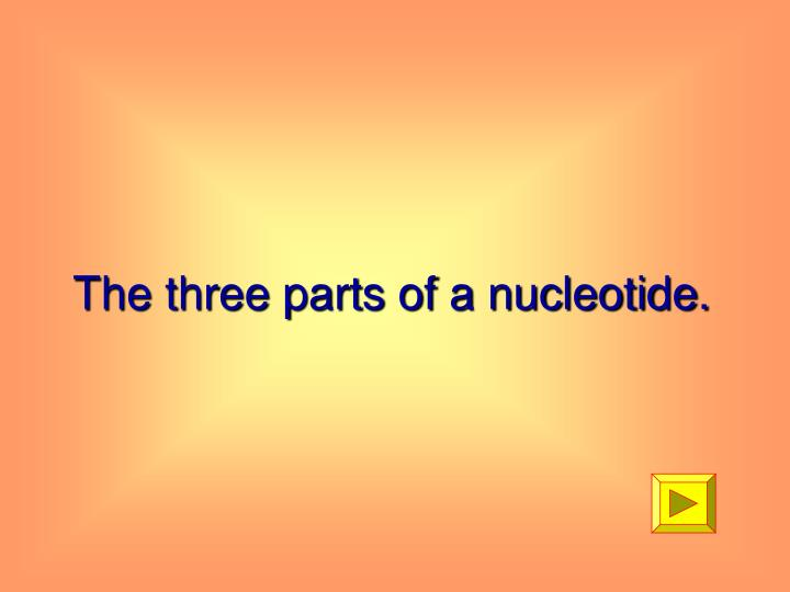 The three parts of a nucleotide.