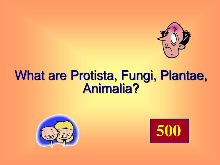 What are Protista, Fungi, Plantae, Animalia?