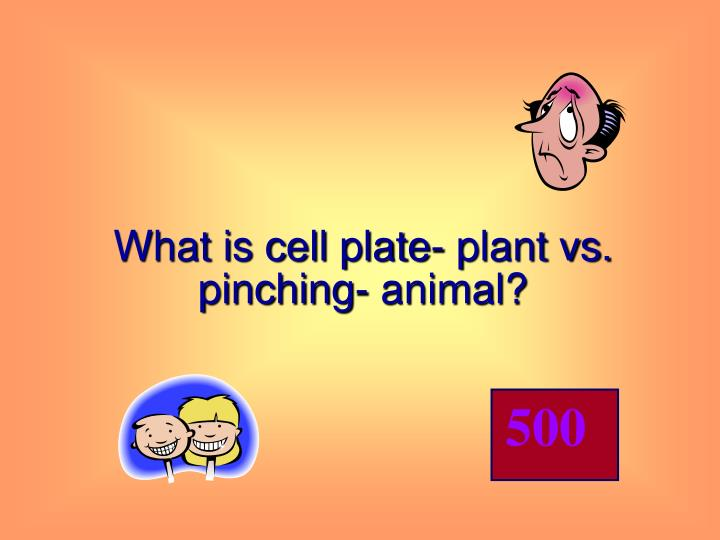What is cell plate- plant vs. pinching- animal?