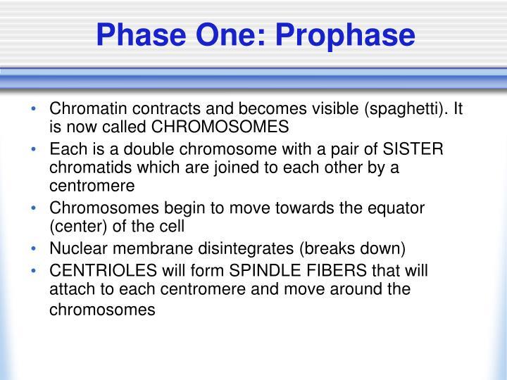 Phase One: Prophase