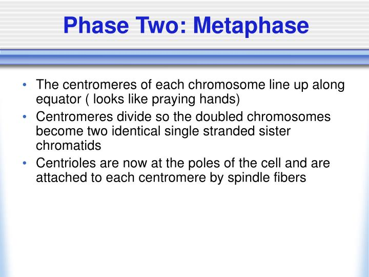 Phase Two: Metaphase