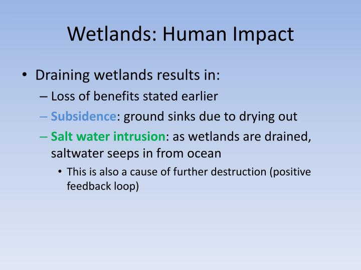 a proposal against the possible impacts of draining part of wetlands Wetland drainage has been the primary management technique applied to wetlands in north american since colonial times the common wisdom, supported by the professions of engineering, public health, and agriculture, has said that wetlands have more value when they are drained.