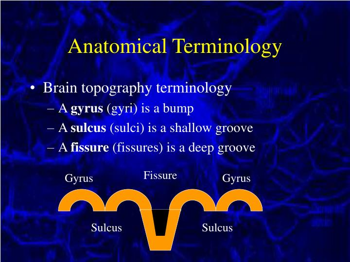 Anatomical Terminology