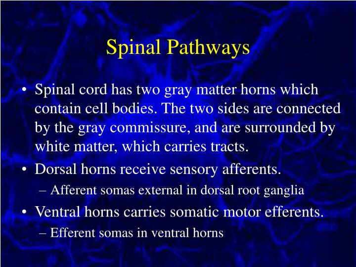 Spinal Pathways