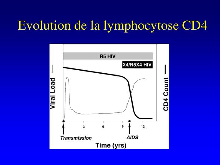 Evolution de la lymphocytose CD4