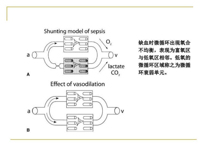 缺血时微循环出现氧合不均衡,表现为富氧区与低氧区相邻。低氧的微循环区域称之为微循环衰弱单元。