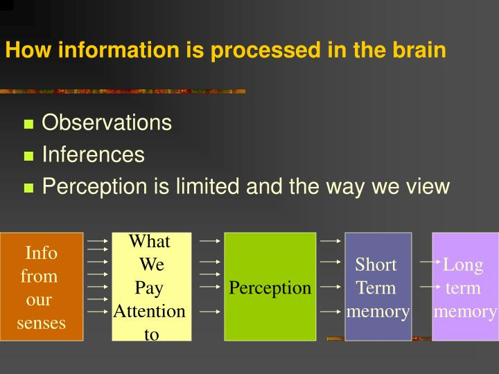 How information is processed in the brain