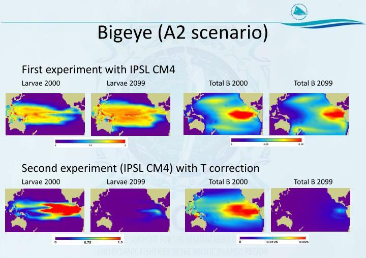 Bigeye (A2 scenario)