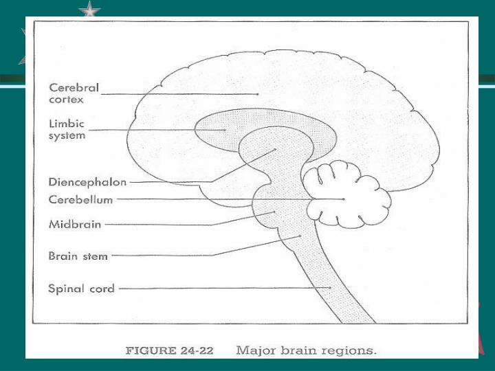 Drugs that act in the central nervous system 1