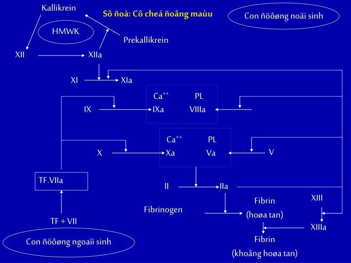 Kallikrein