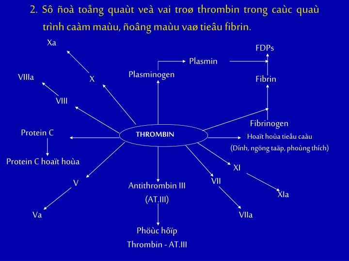 2. Sô ñoà toång quaùt veà vai troø thrombin trong caùc quaù trình caàm maùu, ñoâng maùu vaø tieâu fibrin.