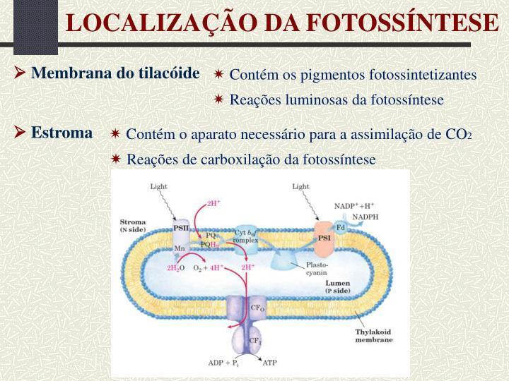 LOCALIZAÇÃO DA FOTOSSÍNTESE