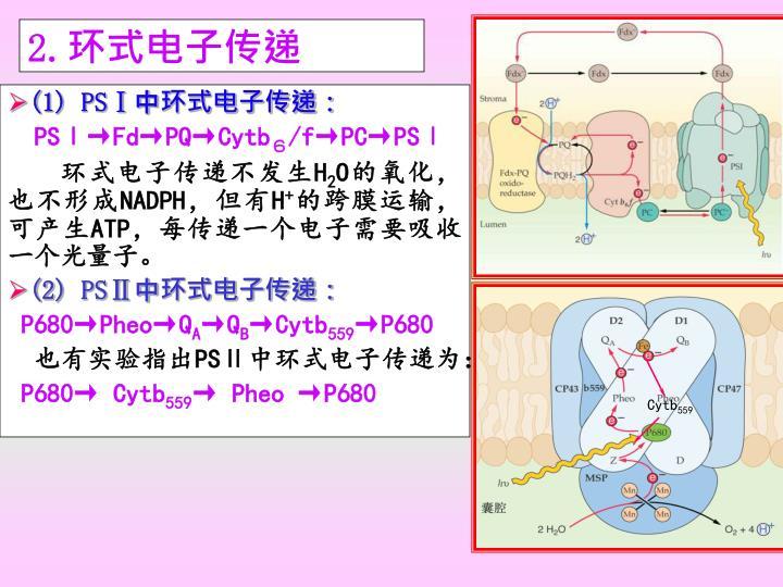 ppt -  u5149 u5408 u4f5c u7528 u7684 u8fc7 u7a0b powerpoint presentation