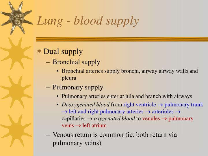 Lung - blood supply