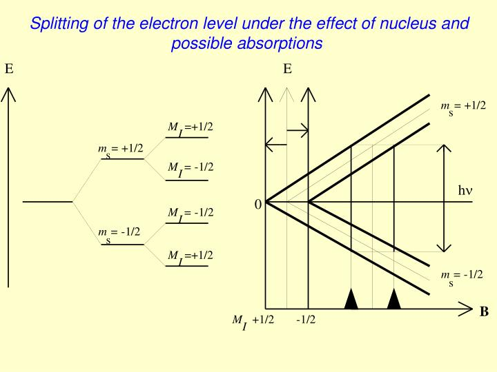 Splitting of the electron level under the effect of nucleus and possible absorptions