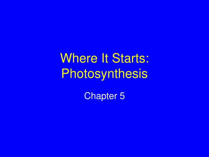 where it starts photosynthesis n.