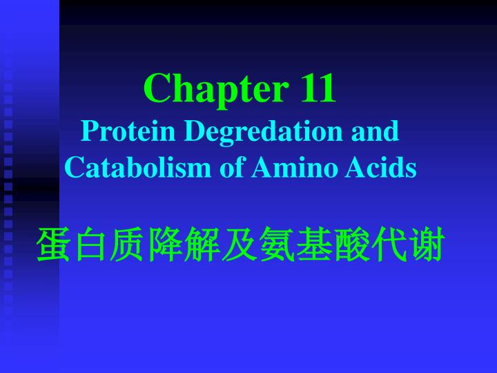 chapter 11 p rotein d egredation and c atabolism of a mino a cids n.