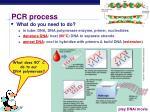 pcr process1